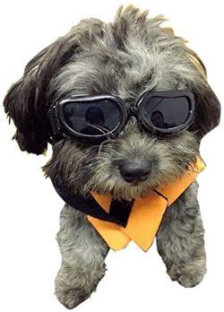 Enjoying Best Dog Goggles